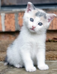 Cleo the row home kitten