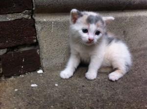 Row Home Kitten